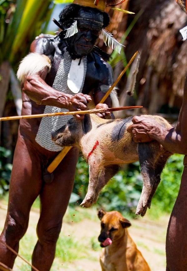 забой свиньи папуасом