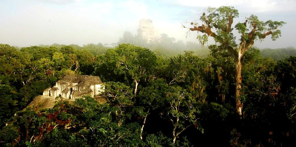 джунгли тикаля