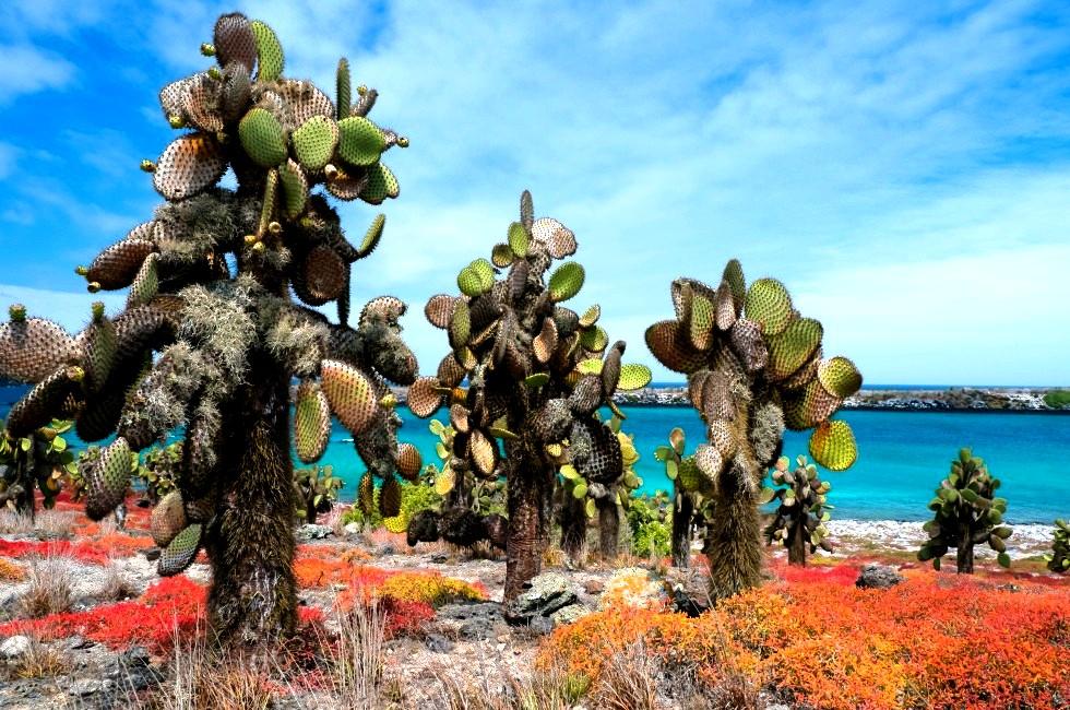 растения галапагосских островов