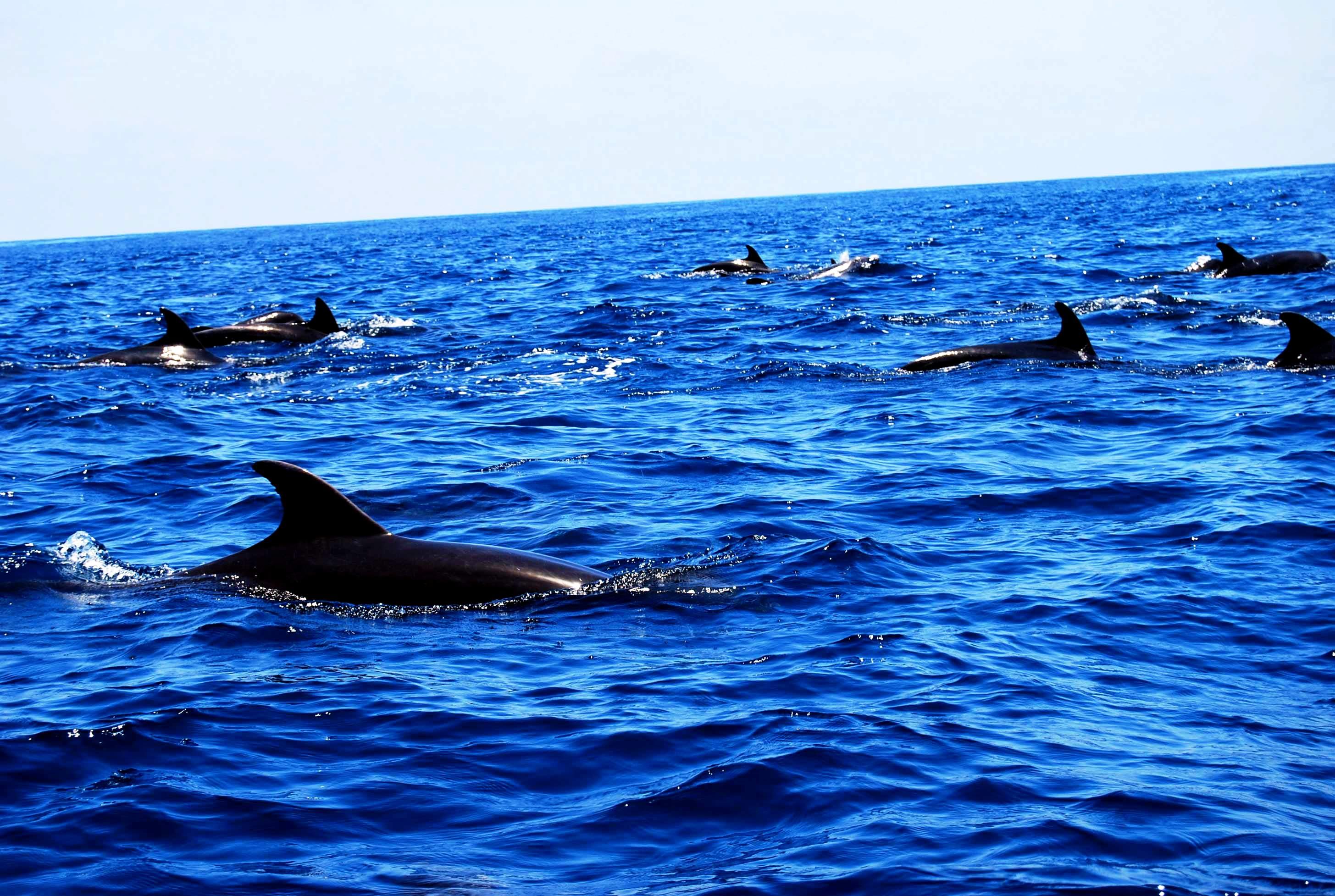 галапагосские дельфины