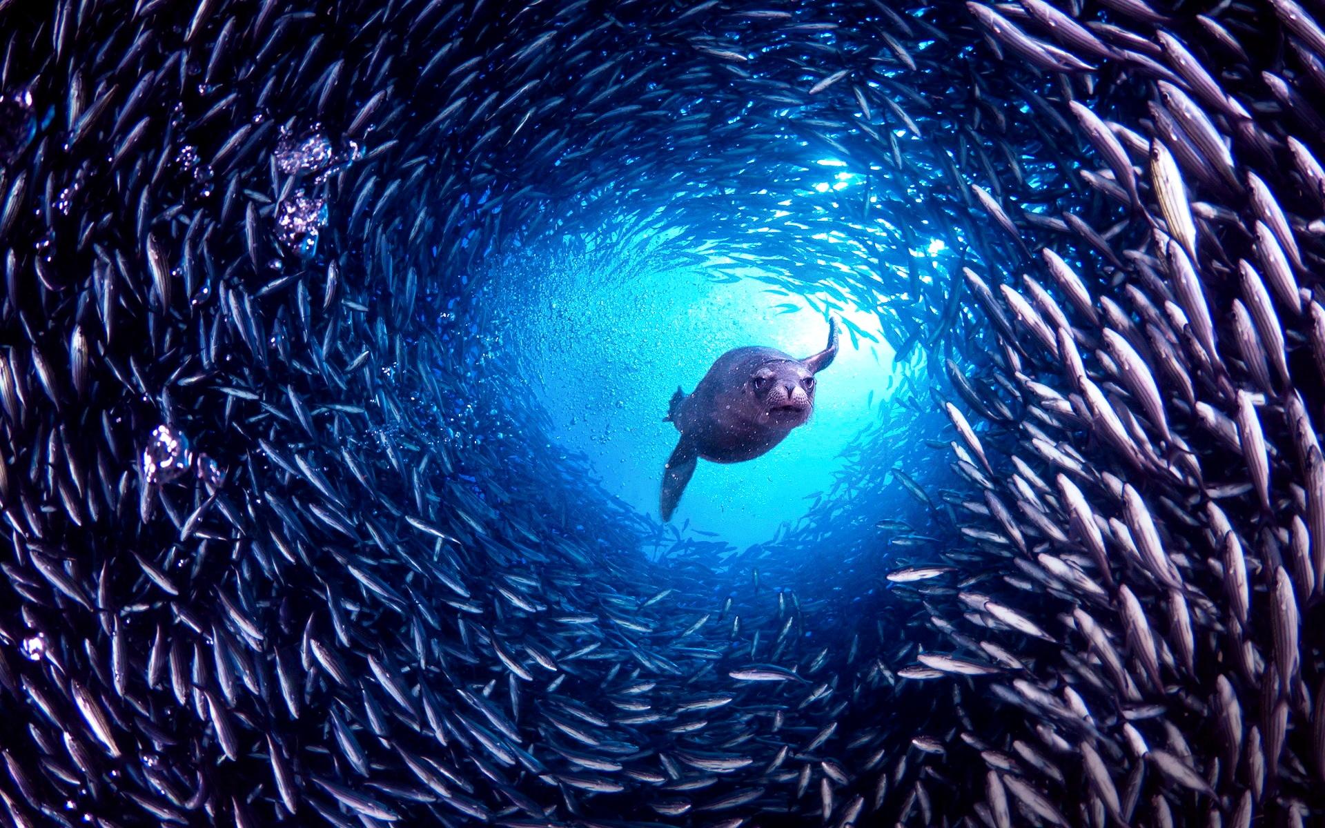 косяк рыб