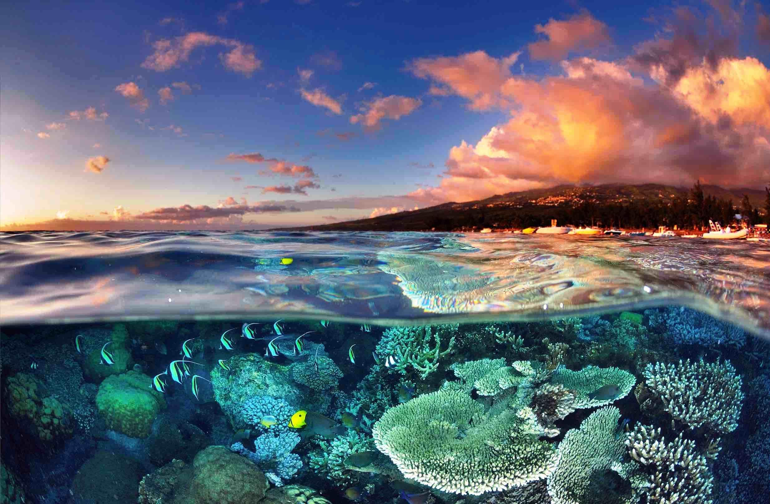 рифы реюньона