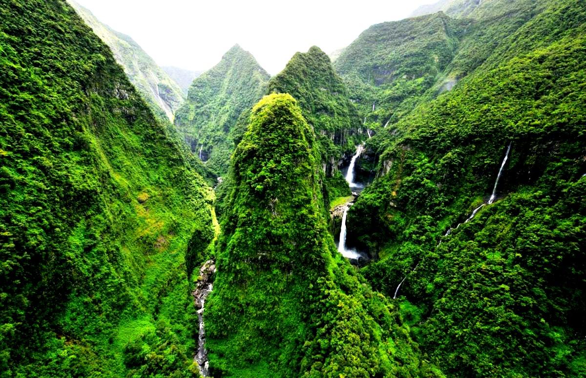 растительность Реюньона