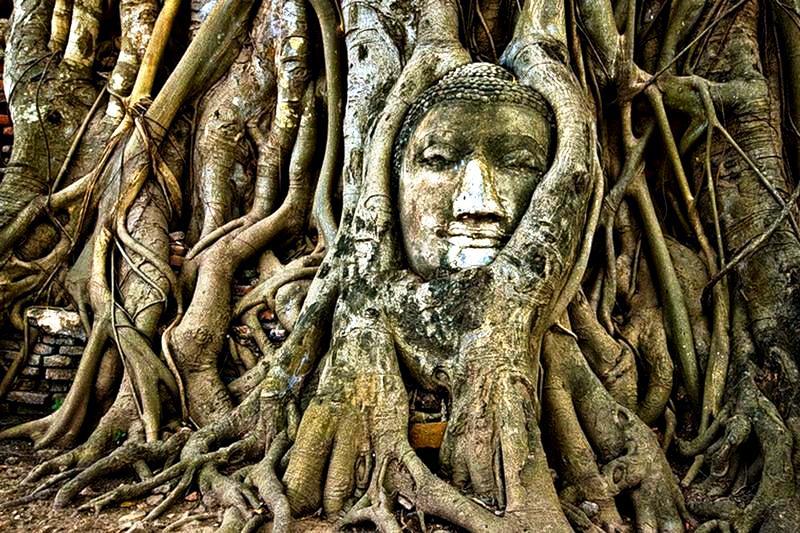 будда в дереве