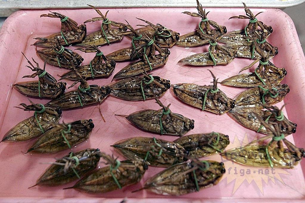 водные жуки