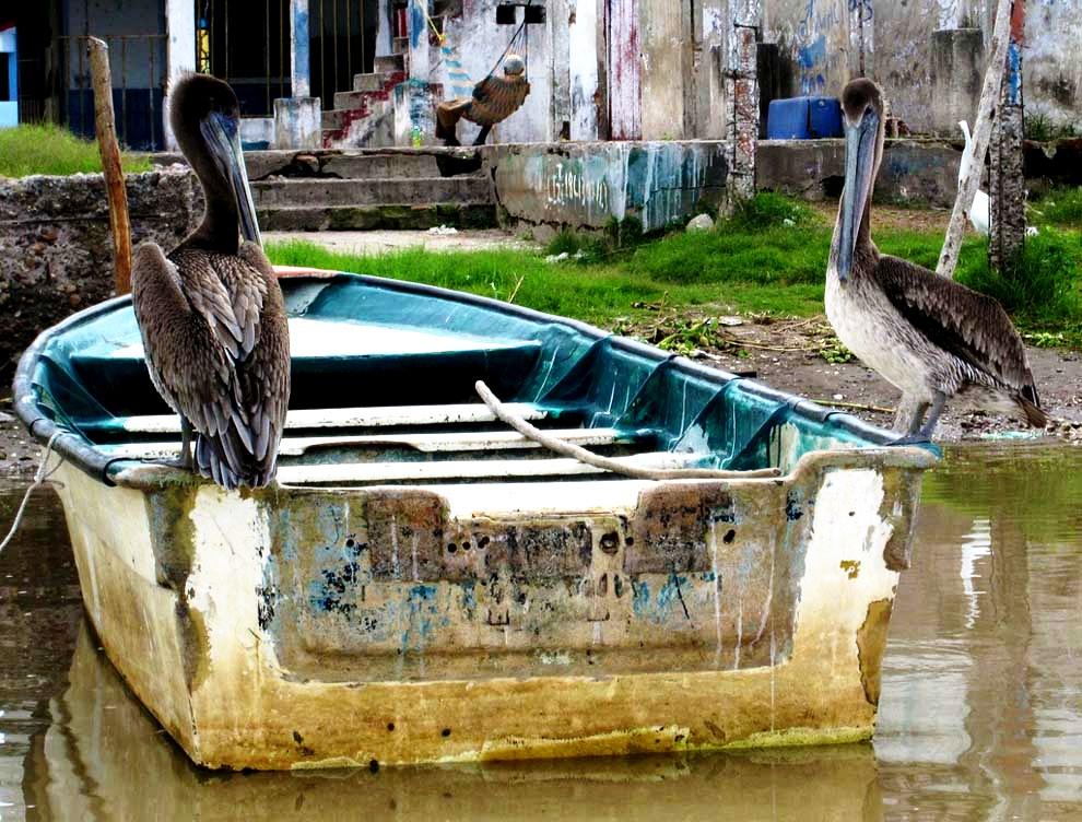 птицы мескальтитана