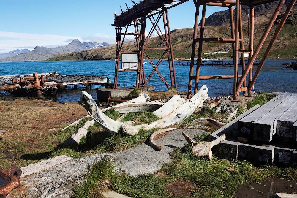 поселок китобоев