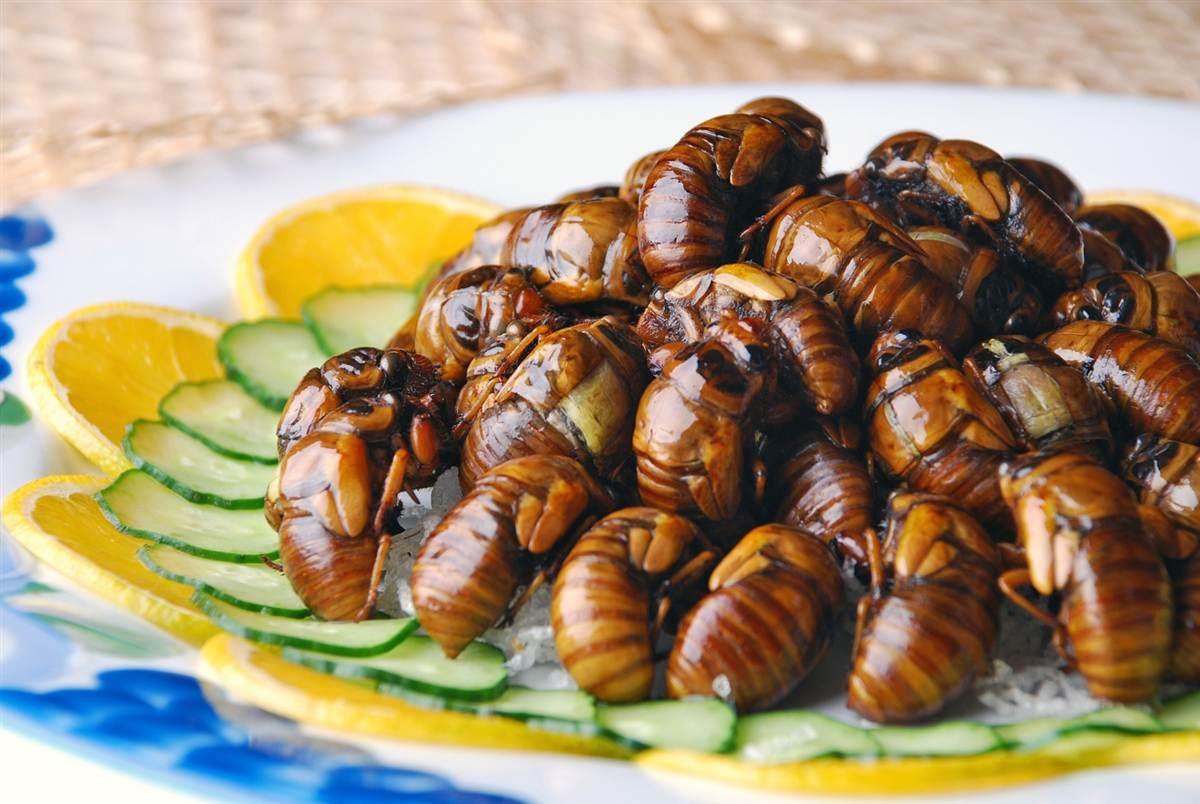 цикады