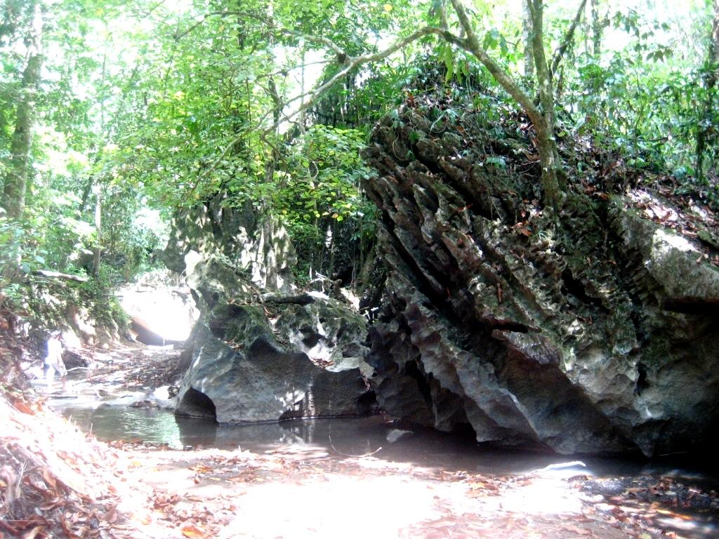 виды джунглей сабанга