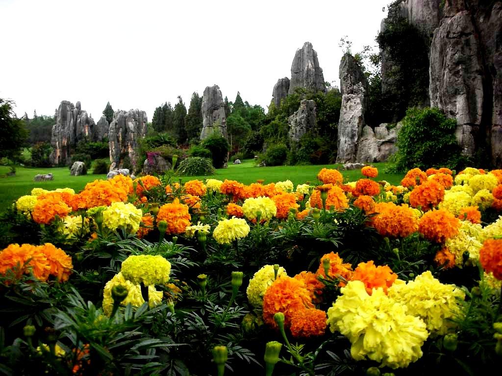 цветы шилиня