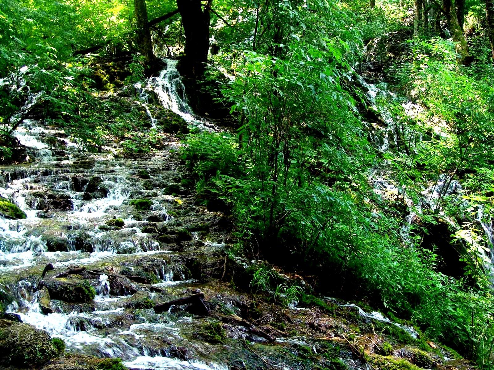 ручьи в парке