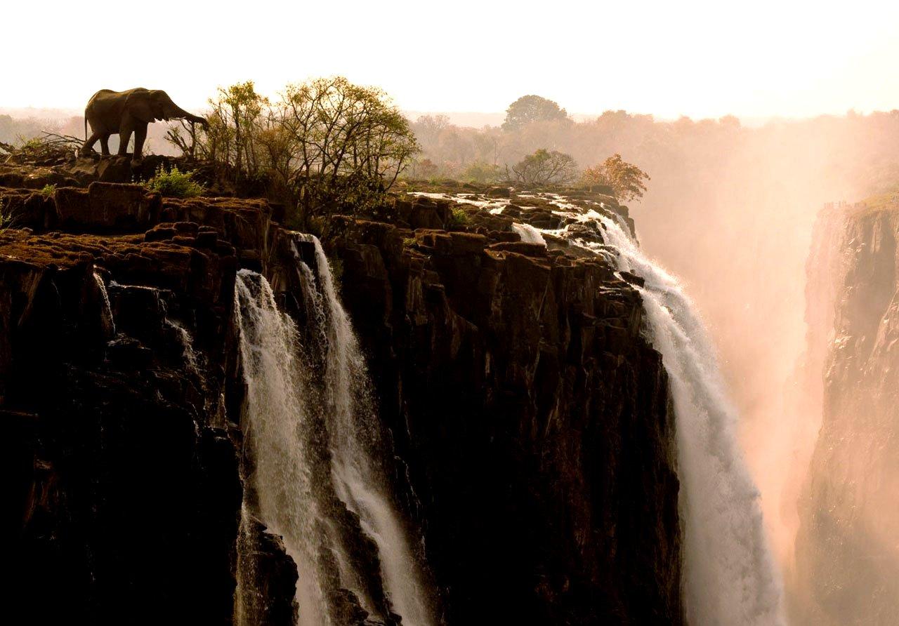 слон на краю водопада