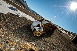 скелет в сухих долинах