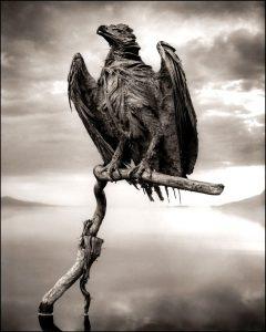 мумия орла