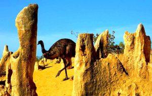страус в пустыне
