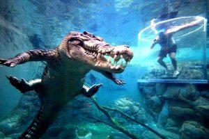 большой крокодил
