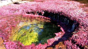 фиолетовые водоросли